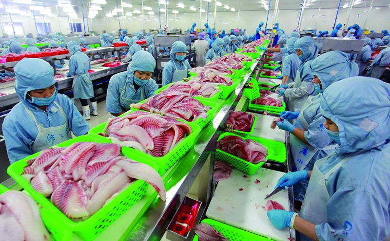 澄迈翔泰渔业供出口的罗非鱼片.jpg